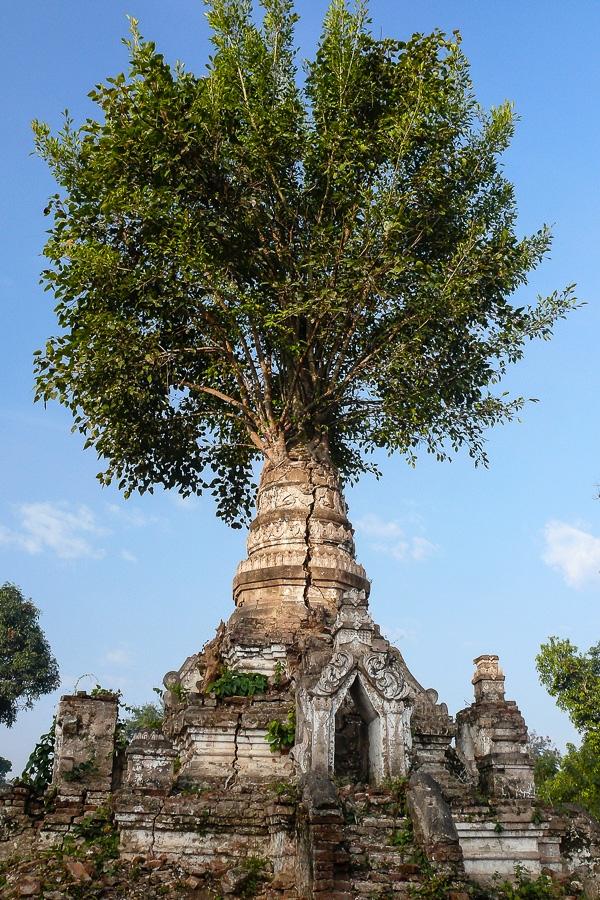 Photographie de voyage - temple envahi par la nature, Myanmar